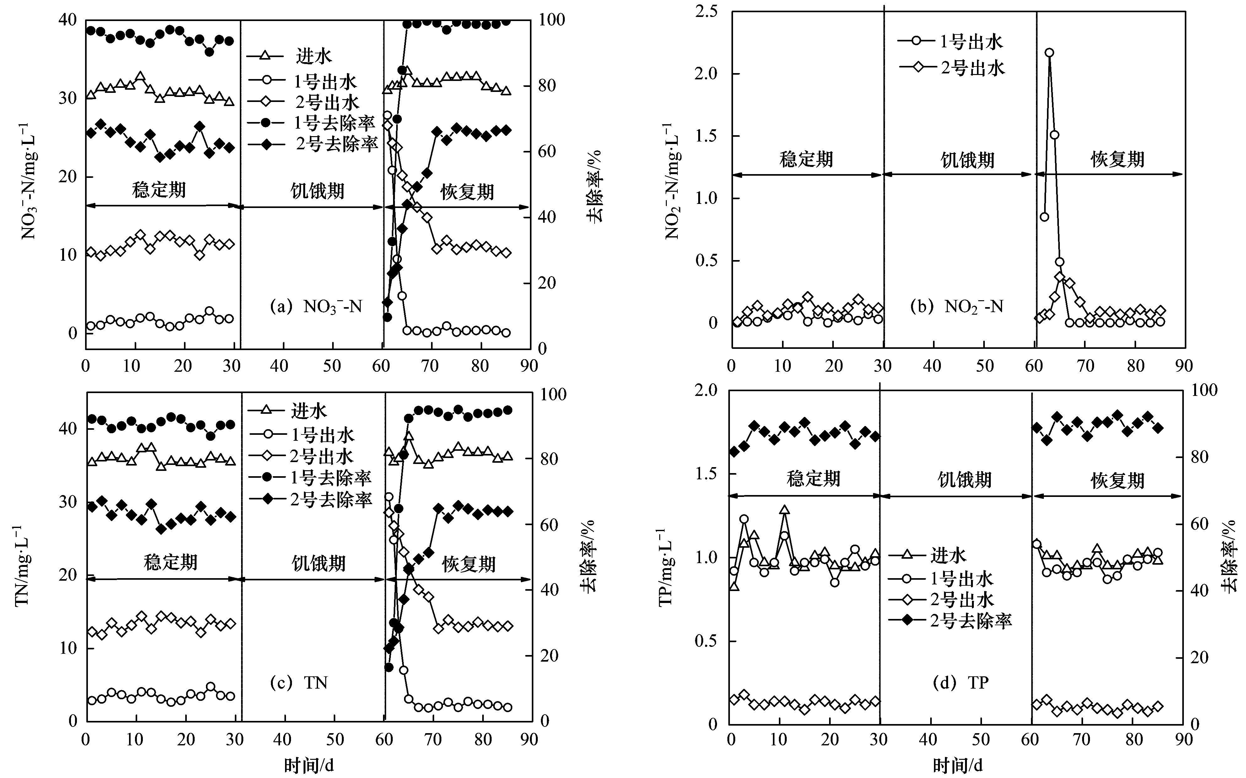 图 2 饥饿前后反应器NO3--N、NO2--N、TN、TP的变化   反应器稳定运行后,停止进水,进入饥饿期.经过30 d的饥饿忍耐后,反应器在低温下(14) 恢复进水,进入恢复期.由图 2可以看出,饥饿忍耐后,1号反应器出水NO3--N增加到27.87 mgL-1,2号反应器出水NO3--N增加到26.56 mgL-1.